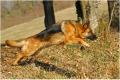 Votre chien revient au rappel, mais au bout d'un quart d'heure :